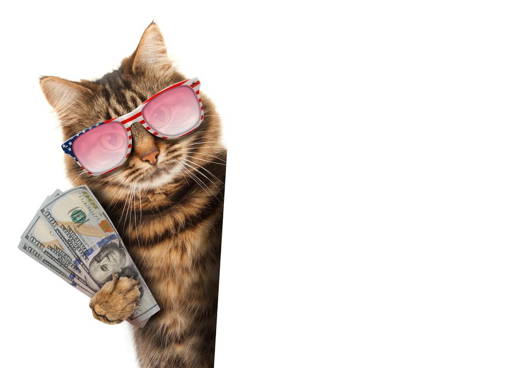 Kedi fiyatları